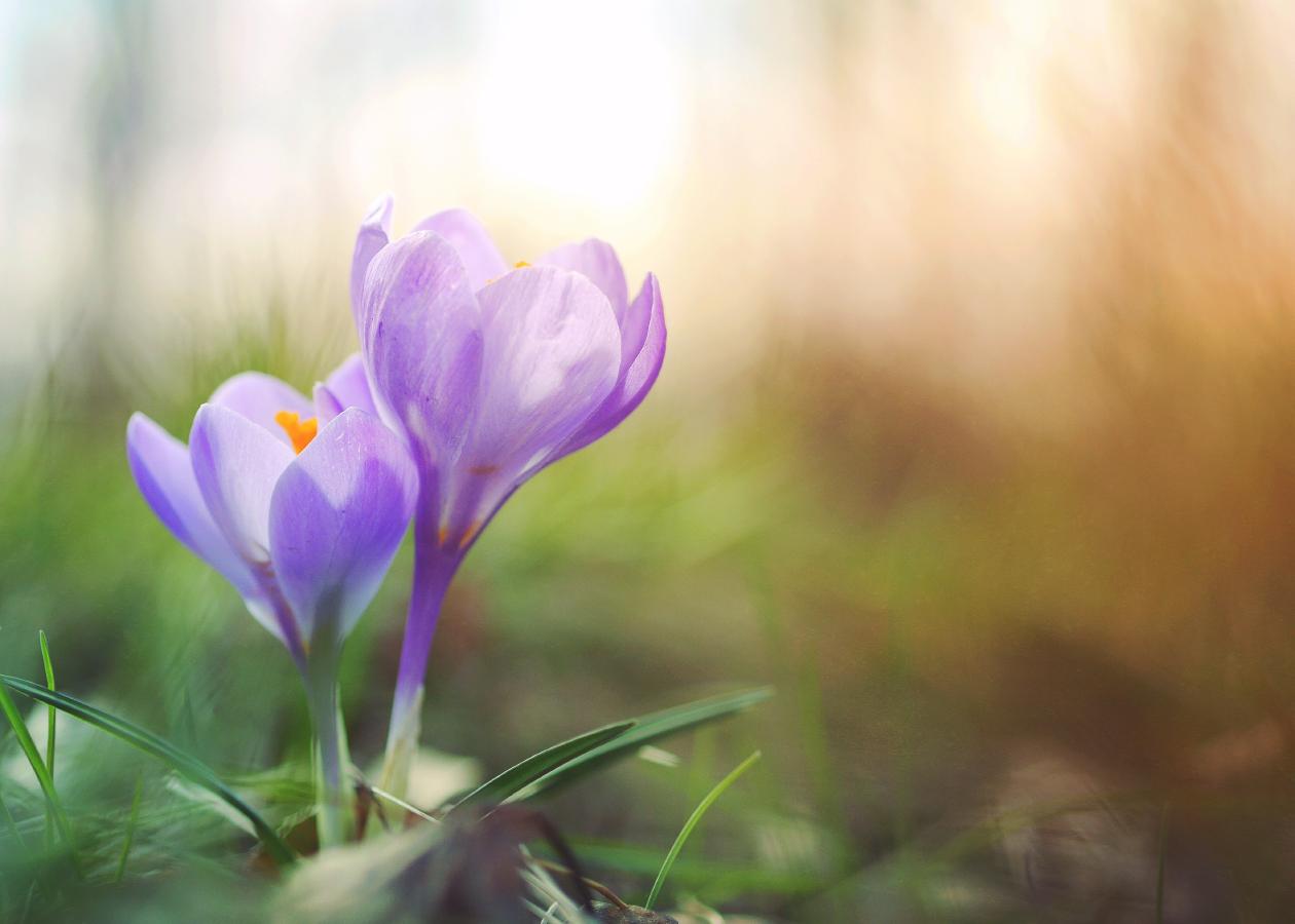 時代とスピリチュアルヘルスを表す花