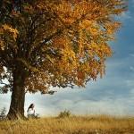 瞑想法が異なれば、脳生理の状態も異なることが判明
